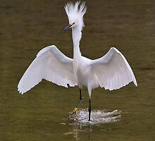 Snowy Egret by SuddenJim