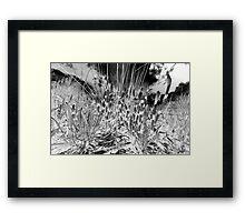 Horsetail #36 Framed Print