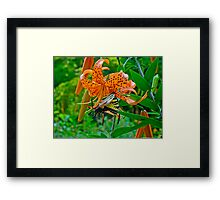 Tiger Swallowtail Butterfly and Turk's Cap Lily Wildflower Framed Print