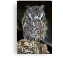 Sleeping Owl Beauty Canvas Print