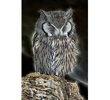 Sleeping Owl Beauty Photographic Print