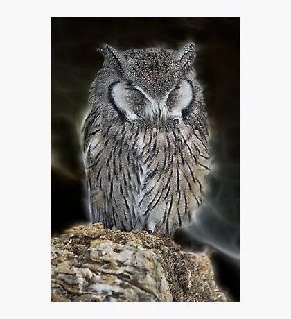 Sleeping Owl Beauty Photographic Print