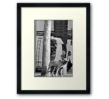 taking cover Framed Print