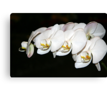 Winter White - Orchids Canvas Print