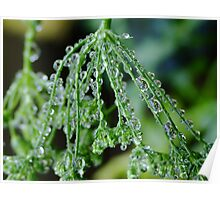 Rain Drops on Celery Seeds Poster