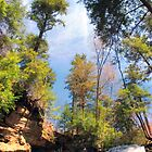 Tall Trees and Blue Skies Over Shawnee Falls by Gene Walls