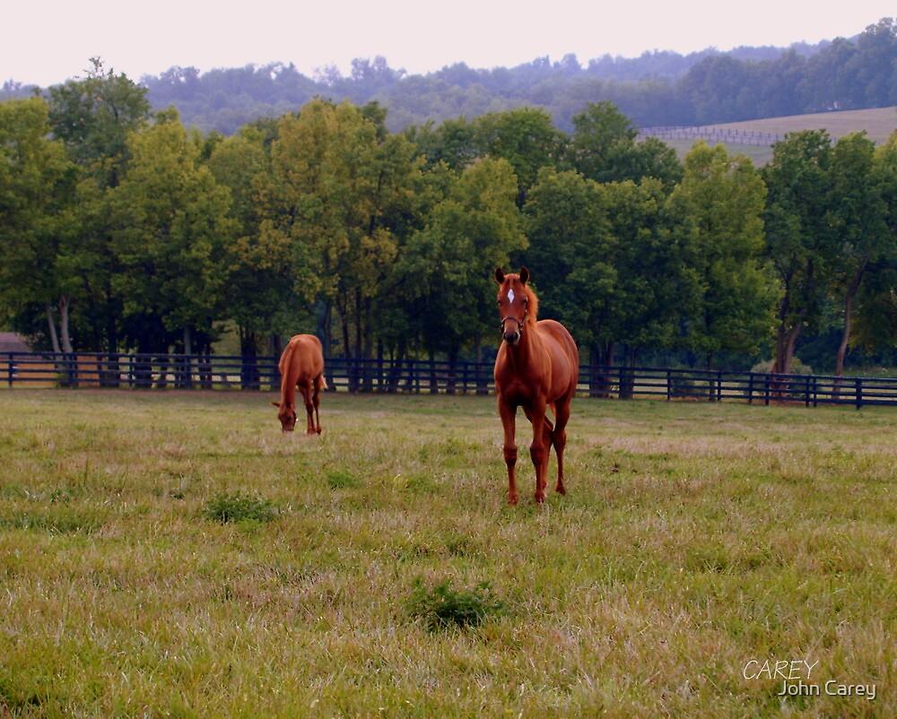 Horse Farm I by John Carey