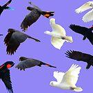 Birds in flight by mickmci