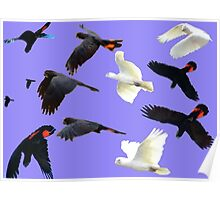 Birds in flight Poster