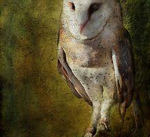 Barn Owl by Barbara Manis