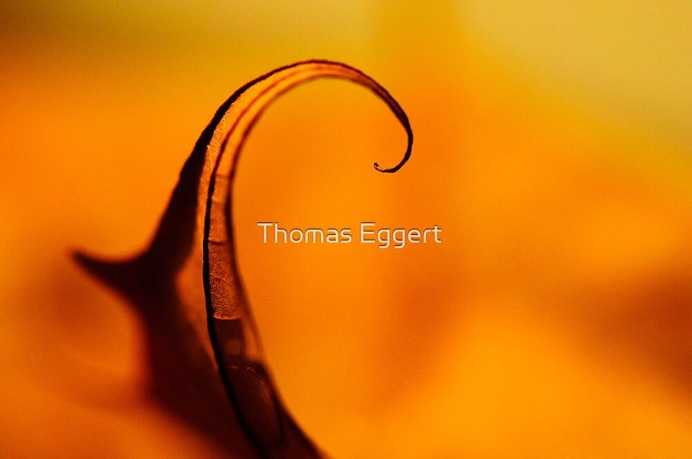 Curling by Thomas Eggert