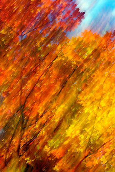Fall burning 2012 by Joseph Rotindo