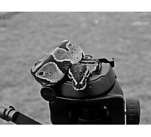 Snake on a tripod Photographic Print