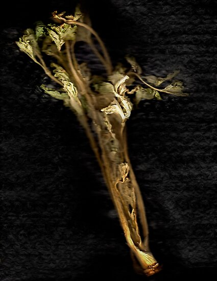 Dried Celery by Jay Gross