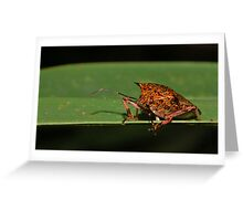 Giant Strong-nosed Stink Bug Greeting Card