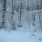 Forest in Winter by Willmoxdog