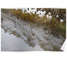 Svalbard Reflection Poster