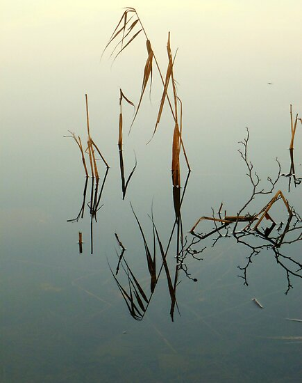 Reflections 2 by globeboater