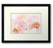 Soft Orchid Glow Framed Print