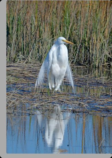 I am Queen of the Salt Marsh (Great White Egret) by imagetj