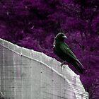 Lochend by DoreenPhillips
