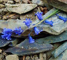 Bluebell Slate by LivKelsey
