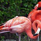American Flamingo by Winston D. Munnings