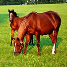 Mare and Foal Kentucky by John Carey