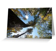 Big Pines Algonquin Park, Northern Ontario Greeting Card