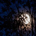 Fall Moonrise by Gene Walls