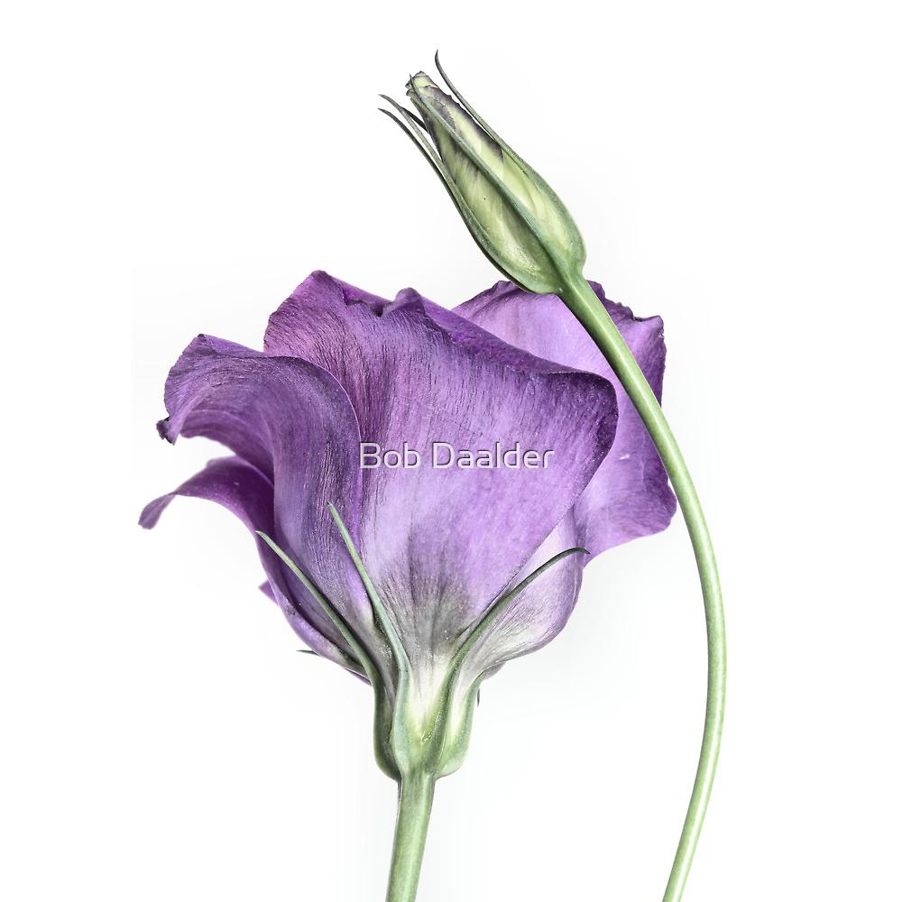 Purple Princess... by Bob Daalder