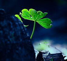 Greenery by Nazareth