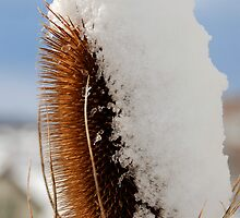 Prickly Snow by Lucy Adams