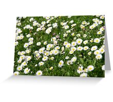Little Daisies Greeting Card