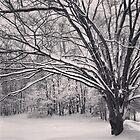 Favorite trees by Jonathan Evans