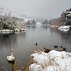 'Swan Lake', Rydal Water, Lake District by Martin Lawrence