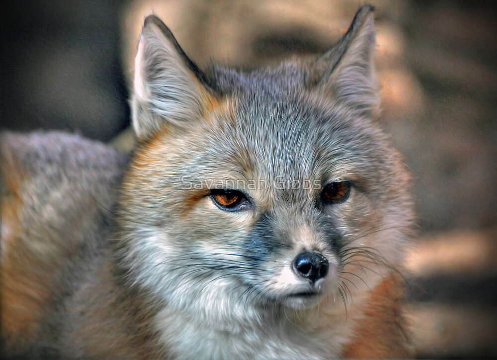Fox by Savannah Gibbs