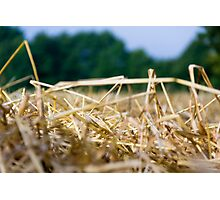 Harvest Time 4 Photographic Print