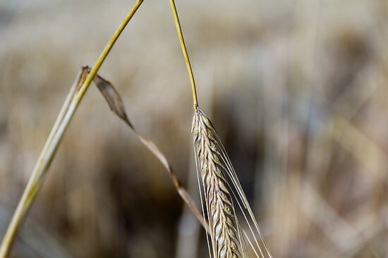 Harvest Time 5 by stay-focussed