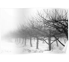 Apple Trees in Winter Poster