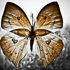 Mariposa tres #1  by Veroniquecz