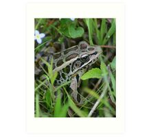 Frog In The Grass Art Print