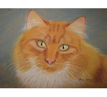Pat's cat Photographic Print