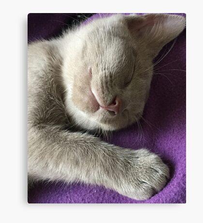 Monty sleeping Canvas Print