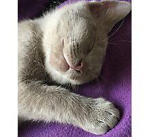 Monty sleeping Photographic Print