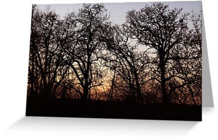 Drive By Silhouettes by Annie Underwood