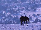 Horse Blues by BettyEDuncan