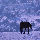 Horse Blues by Betty E Duncan © Blue Mountain Blessings Photography