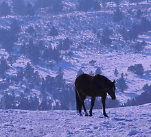 Horse Blues by © Betty E Duncan ~ Blue Mountain Blessings Photography