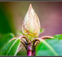 Bud by Mikell Herrick